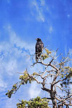Blackbird Singing In The Mountain Light   Artist  Lee Craig   Medium  Photograph - Fine Art Photography  #birdphotography #birdart #leecraig