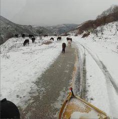 Τα άγρια άλογα στις εντυπωσιακές εικόνες της χιονόπτωσης στη Ροδόπη Greece, Country Roads, Snow, Horses, Outdoor, Greece Country, Outdoors, Outdoor Games, The Great Outdoors