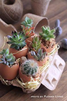 Eggshells? Seriously!?! LOVE IT!!!