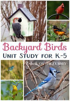 Bird nature study printables learning about birds bird theme kids will love studying the birds in their own backyards with this fun unit study fandeluxe Images