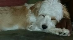 Sleepy~sleep