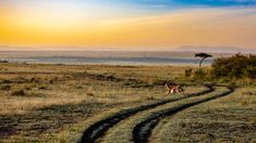 First timers Guide to a Safari -