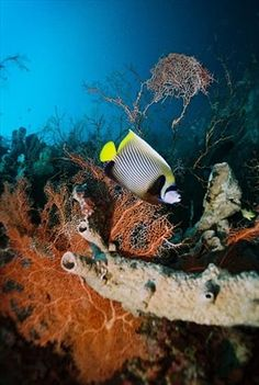 Gili Islands Diving View.