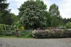 Wunderschöner Kastanienbaum