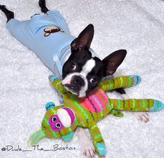 Those jammies are adorable!  This is dude_the_boston on Instagram.