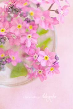 myosotis, une de mes fleurs préférées