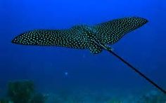 Sea Creatures - - Yahoo Image Search Results