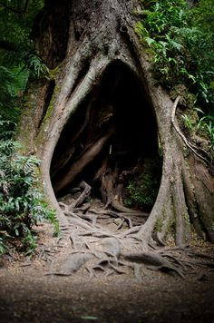 Secret places in trees