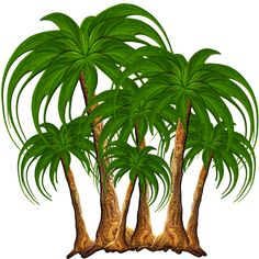 Illustration Botanique Vintage, Botanical Illustration, Cartoon Palm Tree, Palm Tree Pictures, Beach Clipart, Pole Art, School Murals, Easy Coloring Pages, Scenery Wallpaper