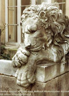 The lion statue at Chatsworth House, Derbyshire, England.