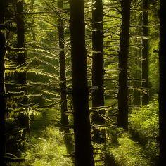 "Nature Photography ""Mossy Forest"" Photo, Moss Green Tree Photograph, Oregon Landscape, Woods, Mossy Tree Wall Decor 8x8 Woodland Photo Print. $24.00, via Etsy."