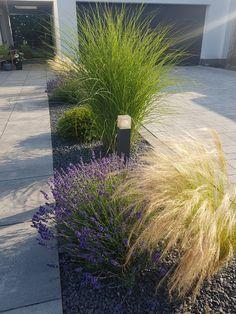 Diesen Kiesstreifen habe ich vor gut 2 Jahren mit Gräsern und Lavendel bepflanzt, dazwischen noch eine immergrüne Eibenkugel. Sieht einfach toll aus und ist sehr pflegeleicht.