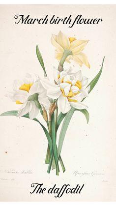 Vintage Botanical Prints, Botanical Drawings, Botanical Illustration, Vintage Flower Prints, Botanical Flowers, Botanical Art, Yellow Flowers, Colorful Flowers, Illustration Botanique