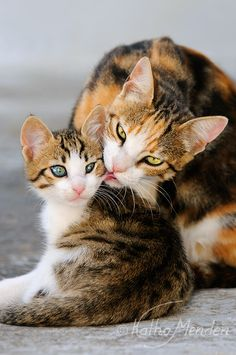 """""""A kitten is so flexible that she is almost double; the hind parts are equivalent to another kitten with which the forepart plays. She does not discover that her tail belongs to her until you tread on it."""" — Henry David Thoreau"""