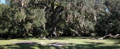 Bulow State Park features the Fairchild Oak (picture), one of the largest live oak trees in the south.