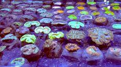 Aqua Medic LIVE Coral Selection