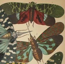 """Résultat de recherche d'images pour """"papillon séguy"""""""