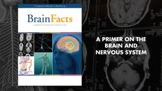 Brain Facts book cover