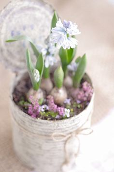 DIY Shabby Chic ~ shabby white tin with spring bulbs My Flower, Beautiful Flowers, Flower Wall, Beautiful Things, Spring Bulbs, Deco Floral, Hello Spring, Happy Spring, Spring Flowers