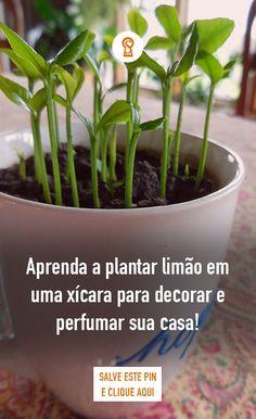 Container Gardening, Garden, Plants, Planting Flowers, My Secret Garden, Eco Garden, Garden Types, Growing Plants, Garden Veranda Ideas