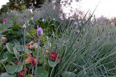 Chive and cress. #kitchengarden #growfood #garden #gardening #potager #vegetables