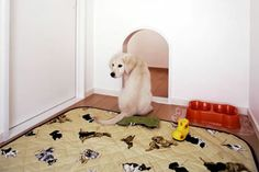 pet-living-dog-space-home