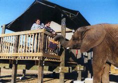 Awesome place in California where a Rescued Elephant brings you your breakfast.  Awesome tours too, we've been there twice!