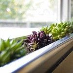 Fascinating Modern Succulent Window Box Planter Ideas