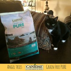 Even our picky little Miss Angel approves of CANIDAE® Grain Free PURE Cat Food! #HealthyPetHappyPet #ad