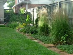 East border: espalier pear tree with herb garden in front, Arborvitae to organize the fenceline with Feather Reed Grasses. Perennial bed before the stepstone path that edges the lawn.