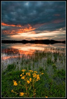 Sunset and the flower, Castle Blayney. Monaghan, Ireland, Photo by Desmond Daly.
