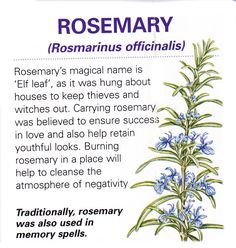 We have always grown Rosemary by the front door 'to ward off witches'. It is working very well so far;)