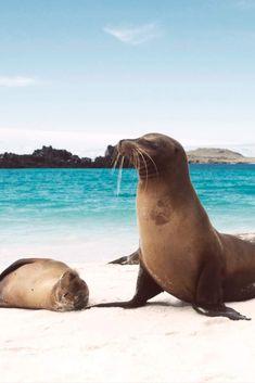 En las Islas Galápagos podréis observar a las tortugas Isabela, consideradas la segunda reserva marina más grande del planeta. También podréis ver leones marinos, pingüinos autóctonos, delfines… Eso sí, necesitaréis un permiso para entrar y tendréis que ir acompañados de un guía. ¡Más destinos sostenibles haciendo clic! Grande, Travel, Animals, Sea Lions, Dolphins, Galapagos Islands, Wonders Of The World, Walk In, Turtles