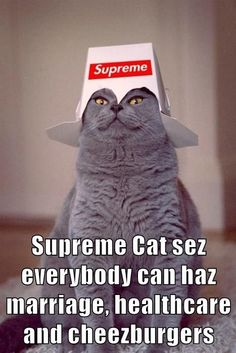 Supreme Cat of the United States Supreme, Health Care, United States, The Unit, Science, Cats, Gatos, Cat, Kitty
