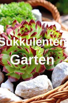 Hydrangea Seeds, Hydrangea Care, Hydrangeas, Indoor Planters, Diy Planters, Diy Garden, Garden Paths, Professional Landscaping, Arran