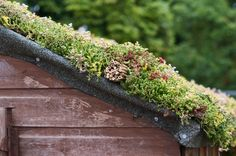 Image result for sedum roofs