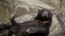 Preview bear, down, cool, logs
