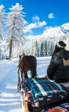 Time for a ride in the horse carriage! The landscape was surreal as it snowed just the night before.. soo much powder snow that the trees where literally white!
