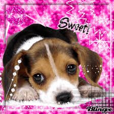 Blingee Google Search Cute Puppies Images Cute Dogs Sweet Dogs