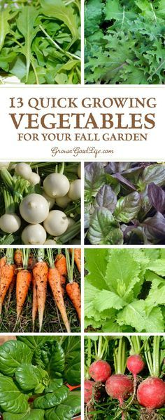 Instead of watching your summer crops struggle to ripen the last few fruits, pull them out and plant some of these quick growing vegetables for your fall garden.