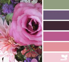 Color schemes for everything