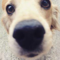 Marley, cute dog #dog #cute