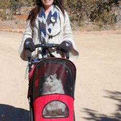 Cat hiking #3 - How most cats prefer to hike! cat in stroller