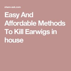 Easy And Affordable Methods To Kill Earwigs in house