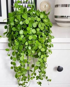 All of these indoor plants are easy to keep alive and perfect for small spaces. #IndoorPlants #Plants #Garden&YardandIndoorplants