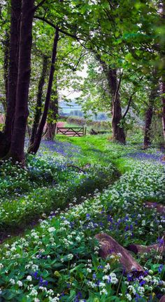 The pretty walk home in Plymouth, Devon, England (bluebells and wild garlic) - photo by Hazel Mansell-Greenwood Beautiful World, Beautiful Gardens, Beautiful Places, Beautiful Pictures, Beautiful Forest, Simply Beautiful, Woodland Garden, Forest Garden, Woodland Flowers