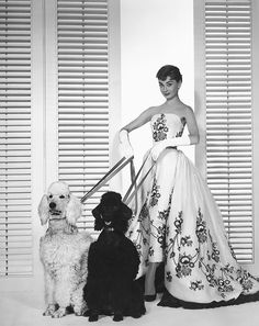 Best In Show: Hollywood Stars With Canine Companions