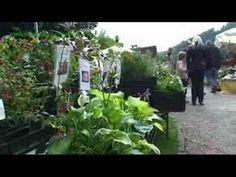 Garten- und Pflanzenmarkt Zwingenberg 20.09.2008