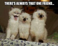 There's always that ONE FRIEND! ...Hehehee #Kitten #Humor #Friendship