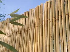 Bamboo fence... want to make this out of my own bamboo...